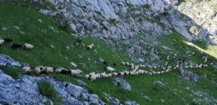 Camp d'été 2021 au Lapi di Bou